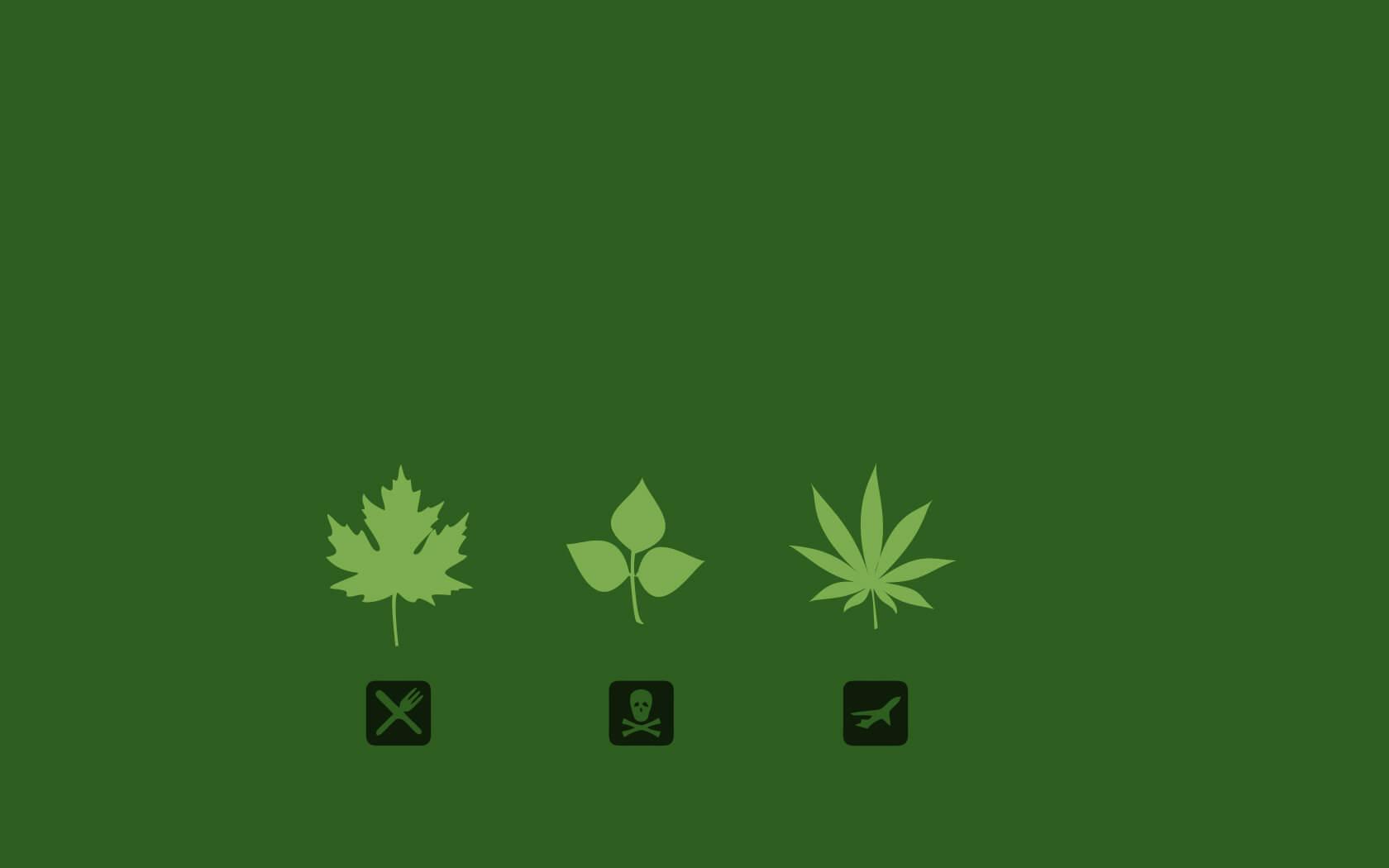 Triple Marijuana THC Threat